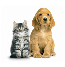 Shop Pet Food & Supplies
